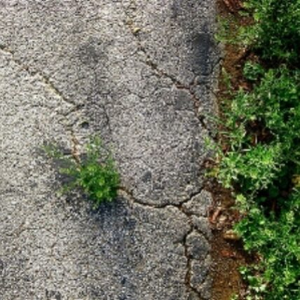 plant growth from concrete