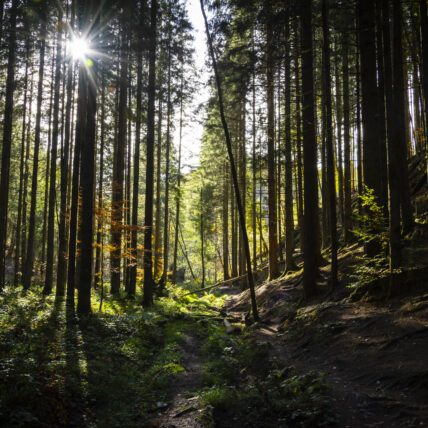 Photo of grove of trees in dappled light