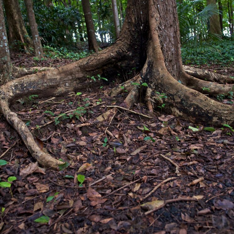 Photo of tree roots with green growth