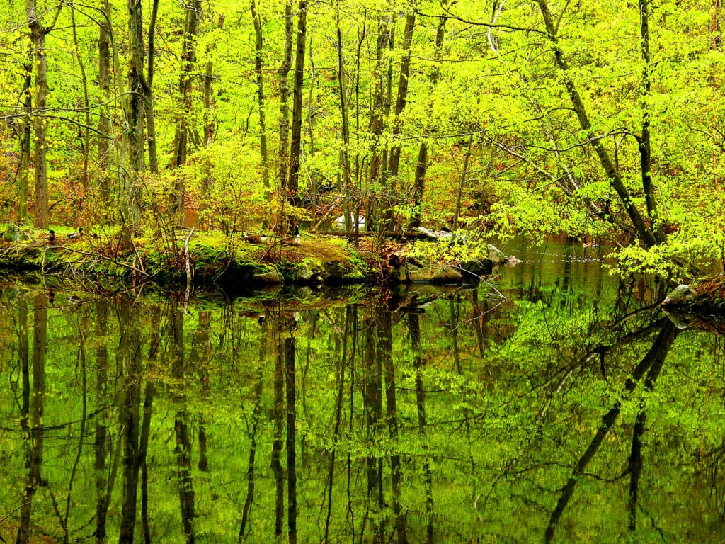 trees reflecting on water