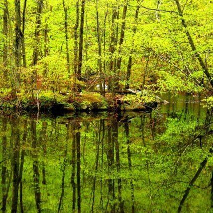 Photo of trees reflecting on water