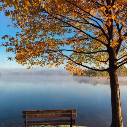 bench next to lake and tree